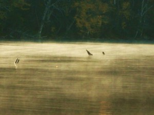 misty_cranberry_lake_edited