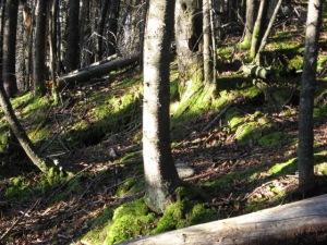 a little green on a fall hike