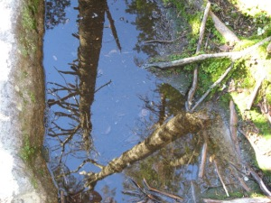 Adirondack reflections while pausing to catch my breath on a two mile vertical climb.